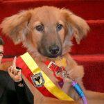 Santos anuncia cambio de Bacatá por perro Border Collie