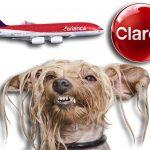 Avianca, Claro y olor a perro mojado, las cosas favoritas de los colombianos, revela encuesta