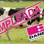 Vacas lecheras contarán como empleadas para el DANE
