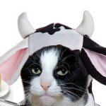 Ante escasez, hipsters lanzan mantequilla de leche de gata