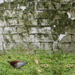 Muros-orinales de Bogotá serán declarados humedales
