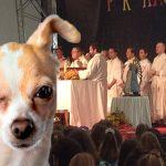 Corte prohíbe expresión «perros en misa»
