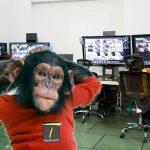 Luto por muerte de «Cuchuflí», chimpancé que despachaba articulados y buses del SITP