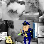 Anuncian severas multas a dueños de mascotas que no publiquen en redes sus fotos