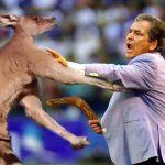 Última hora: Pinto se fue a los golpes con un canguro en Australia