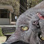 Policía decomisa dosis de catnip
