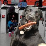 Con salchichón estarían sobornando perros guardianes de TransMilenio